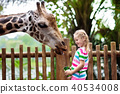 zoo, giraffe, animal 40534008