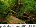 봄의 야쿠시마 太忠岳 보도 40534830