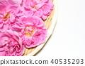 장미, 장미꽃, 로즈 40535293