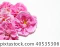 玫瑰 玫瑰花 粉红 40535306