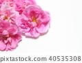 玫瑰 玫瑰花 粉红 40535308
