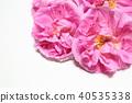 玫瑰 玫瑰花 粉红 40535338