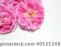 玫瑰 玫瑰花 粉红 40535348