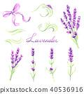 flower, lavender, herbal 40536916