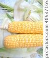 summer, midsummer, corn 40537165