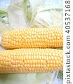 summer, midsummer, corn 40537168