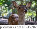 鹿 野生动物 野生生物 40545707