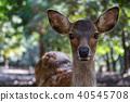 鹿 野生动物 野生生物 40545708