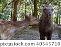 鹿 野生动物 野生生物 40545710