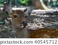 สัตว์ป่า,สัตว์,ภาพวาดมือ สัตว์ 40545712