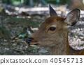 สัตว์ป่า,สัตว์,ภาพวาดมือ สัตว์ 40545713