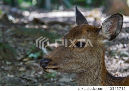 사슴, 야생 동물, 들짐승 40545713