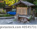 鹿 动物 野生动物 40545731