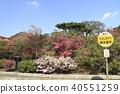 杜鵑花指導Tatebayashi-shi杜鵑花ga Oka公園前廣場的會場 40551259