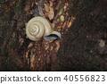 蜗牛 舞舞 人工耳蜗 40556823