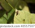 虫子 漏洞 昆虫 40557507