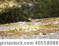 动物 蜥蜴 爬行动物 40558088