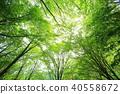 새잎, 어린 잎, 새싹 40558672