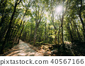 Kutaisi, Georgia. Forest Road Lane Pathway Among Greenery In State 40567166