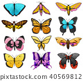 Collection of colorful butterfly or wild moths insects. Mystical or entomological symbol of freedom 40569812