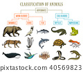 Classification of Animals. Reptiles amphibians mammals birds. Crocodile Fish Bear Tiger Whale Snake 40569823