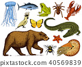 Set of animals. Reptile amphibian mammal insect. Bug Bear shell jellyfish crocodile butterfly fish 40569839