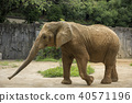 코끼리, 동물, 동물원 40571196