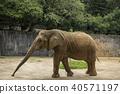 아프리카 코끼리 40571197