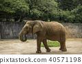 코끼리, 동물, 포유류 40571198