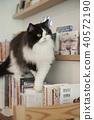 แมว 40572190