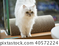 고양이 40572224