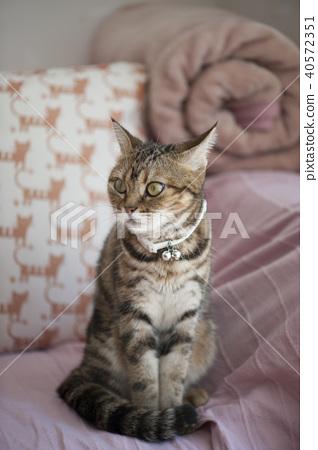 Cat 40572351