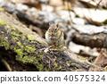 animal, animals, squirrel 40575324