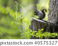animal, animals, wild animal 40575327