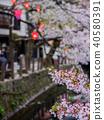 kinosakionsen, cherry blossom, lit up 40580391