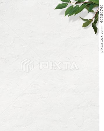 배경 - 흰 - 잎 40580740