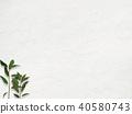 배경 - 흰 - 잎 40580743