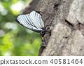 곤충, 벌레, 나비 40581464