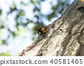 곤충, 벌레, 벌 40581465