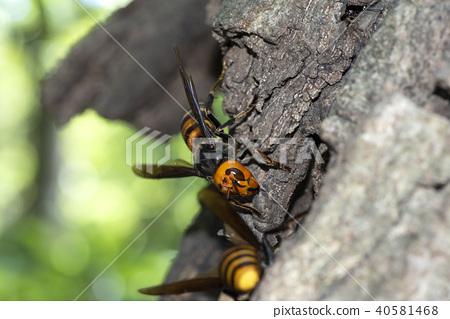 곤충, 벌레, 벌 40581468
