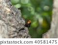 곤충, 벌레, 벌 40581475