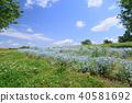 초여름, 만개, 활짝 핌 40581692