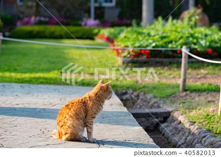士林官邸花園的流浪貓 台湾士林官邸庭園の野良猫 A Cat Sits On The Ground 40582013