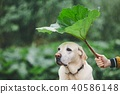 Rainy day with dog in nature 40586148