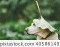Rainy day with dog in nature 40586149