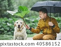 Rainy day with dog in nature 40586152