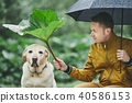 Rainy day with dog in nature 40586153