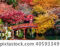 Asian woman wearing japanese traditional kimono 40593349