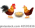 Rooster, chicken and eggs in the nest Vector 40595836