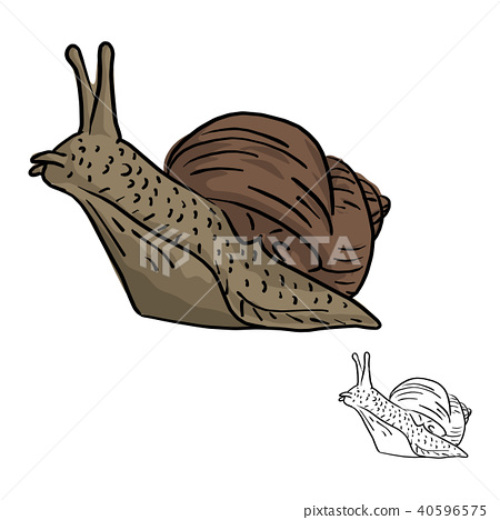 snail vector illustration sketch doodle hand drawn 40596575